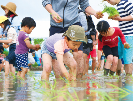 Rice Cultivation Experience Activities